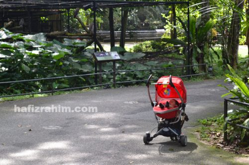 Zoo taiping - alone