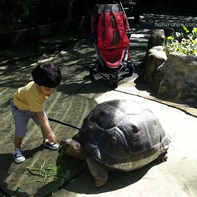 Khair dan kura-kura gergasi