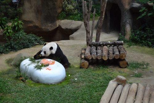 Panda Malaysia