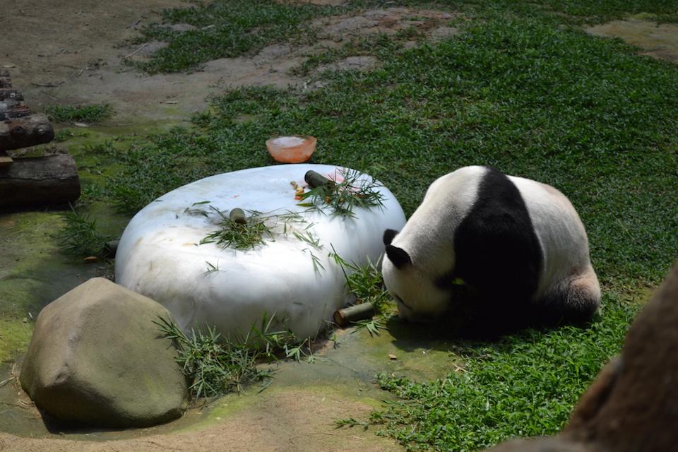Panda Zoo Malaysia