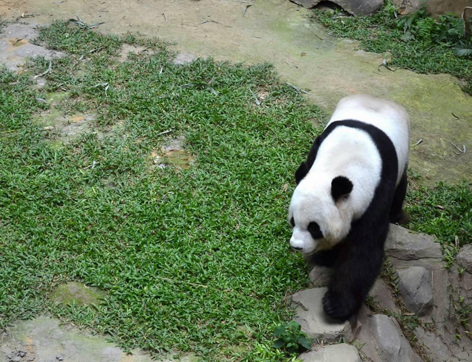 Panda Zoo Negara
